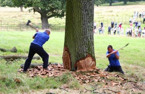 tree_chopping_by_cassidylovesart-d4z7dfh